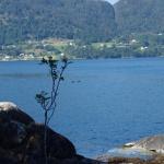 Die See lässt Schweinswalbeobachtungen zu