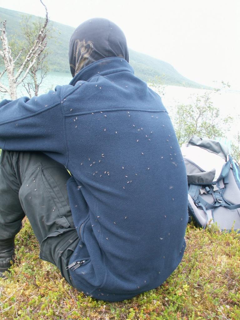 Unerträgliche Mückenplage wenn man sich nur kurz setzt
