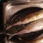 Feinste  Makrele selbst gefischt